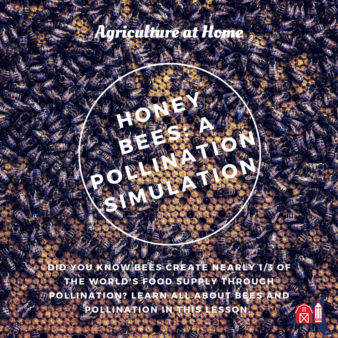 Honey Bees: A Pollination Simulation
