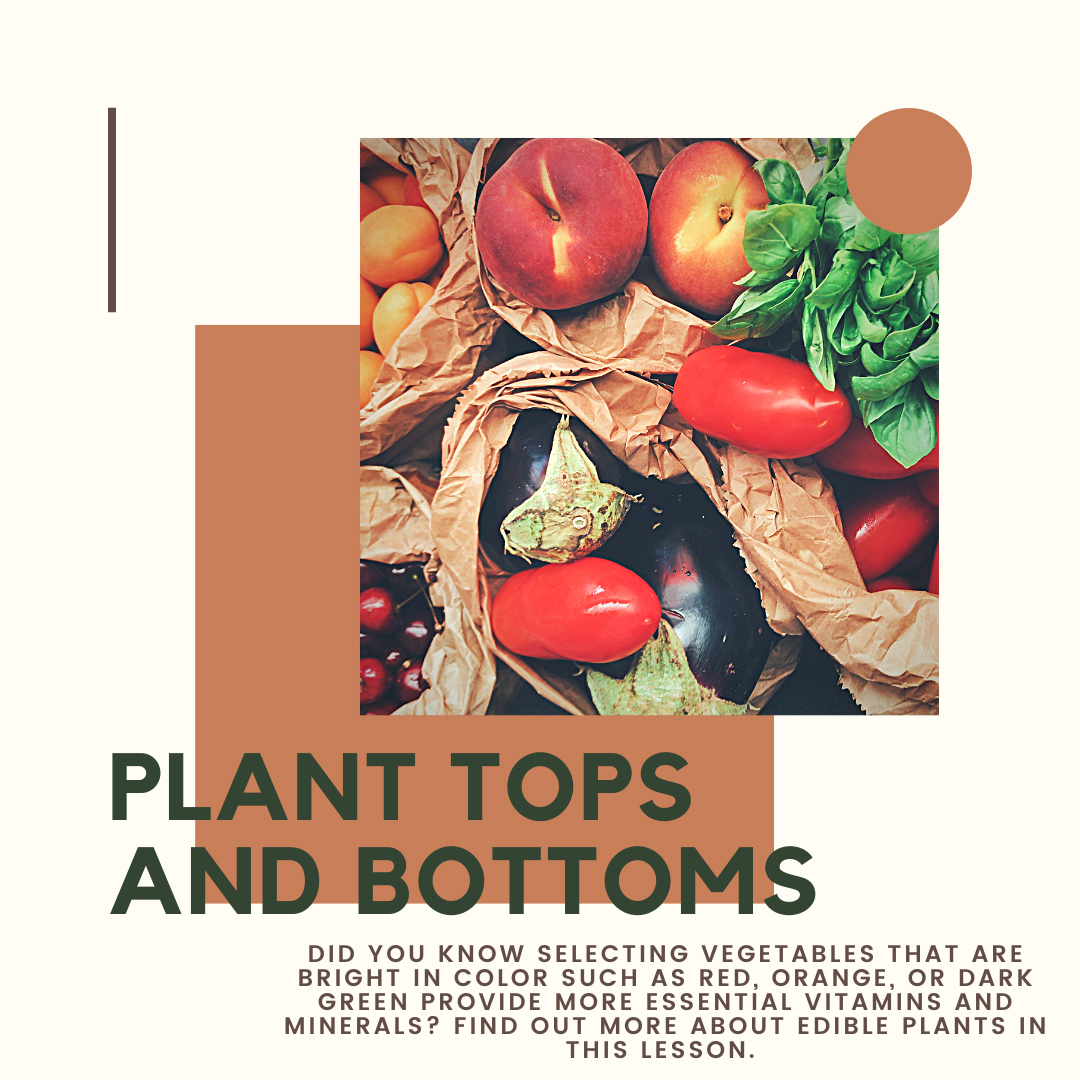 Plant Tops and Bottoms